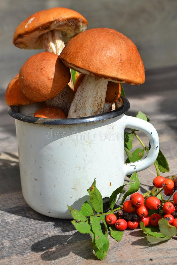 Young boletus grows in the forest, a mushroom with a red bonnet and a white foot , russian cuisine, rustic background, vertical. Young boletus of the forest, a stock photography