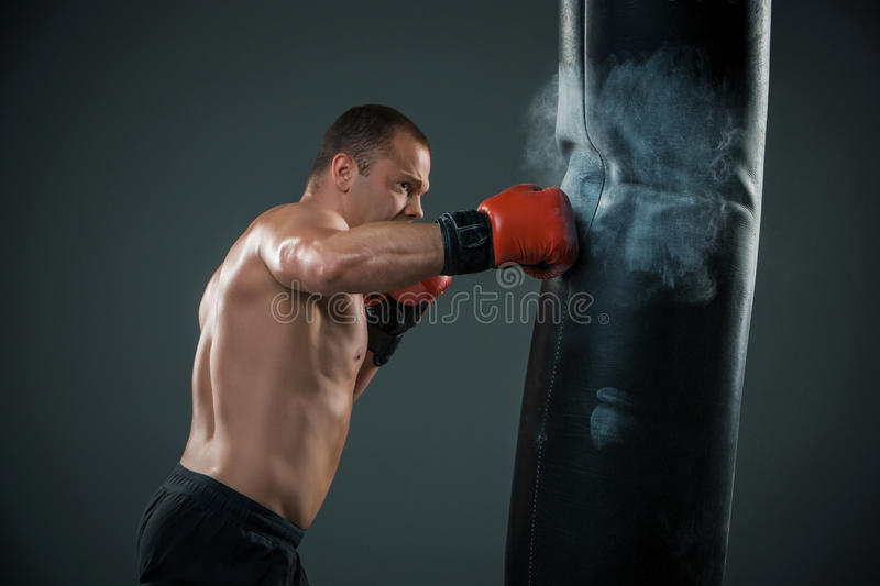 Young Boxer fighter stock image