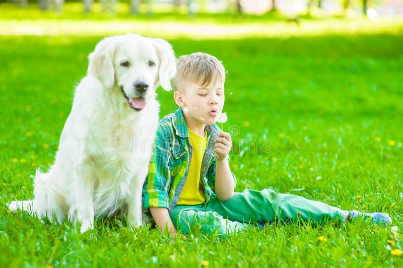 Young boy with golden retriever dog sitting on green grass and blowing dandelion royalty free stock photo