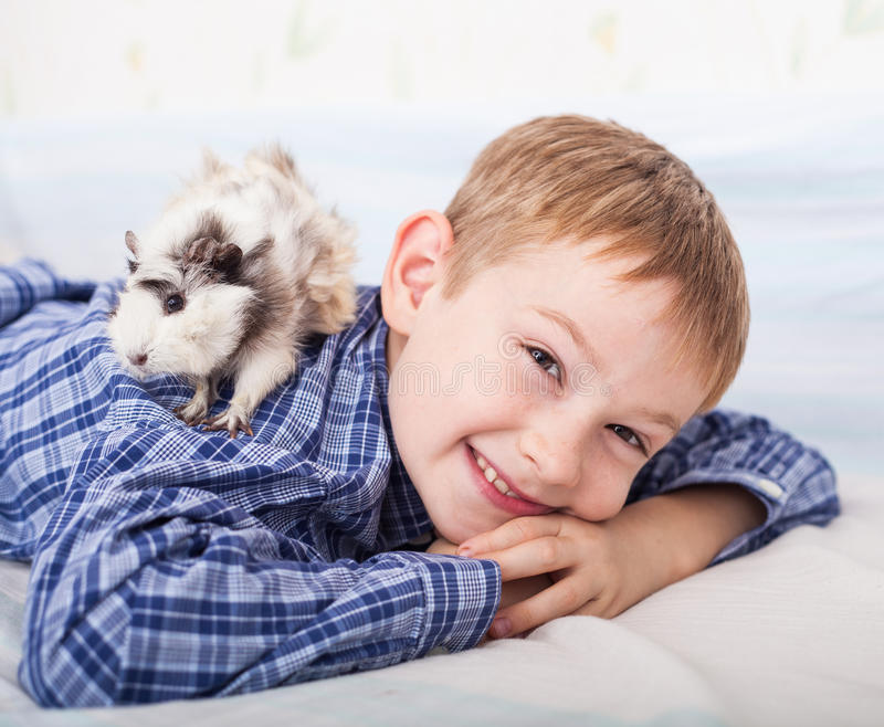 Young boy with guinea pig royalty free stock photos