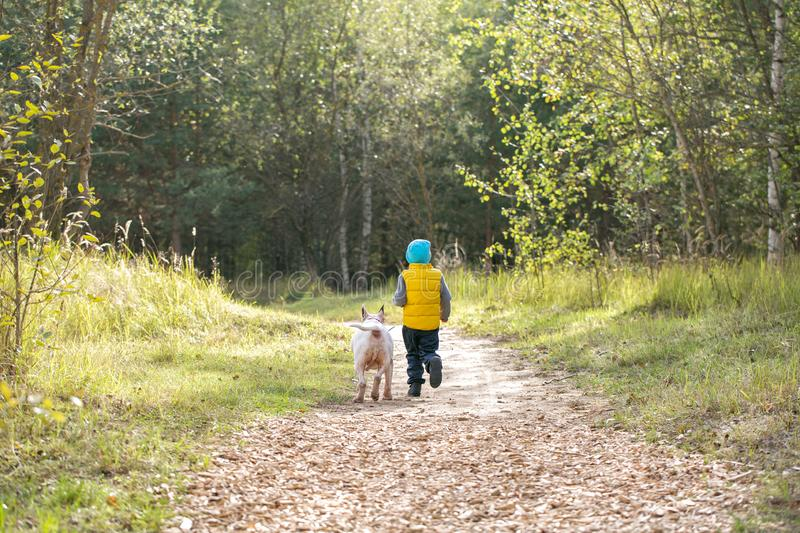 Young boy and his best friend white English bull terrier. Enjoying a walk in nature on a sunny summer day stock image