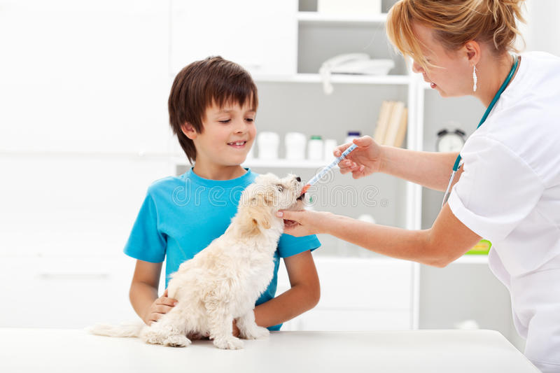 Young boy with his dog at the veterinary royalty free stock images