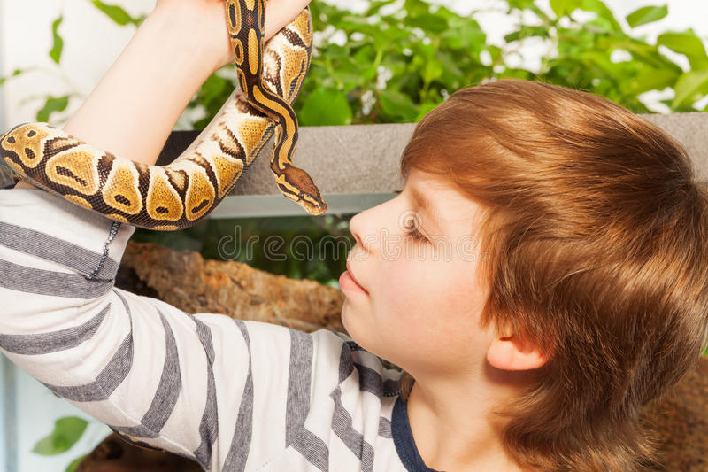 Young boy with pet snake - Royal or Ball Python. Close portrait of a young boy holding his lovely pet snake - Royal or Ball Python close to face royalty free stock photography