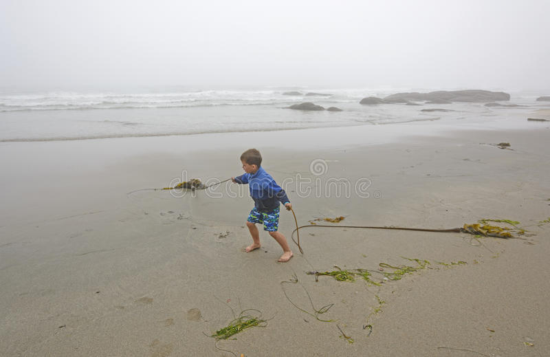 Young Boy Playing with Kelp on the Beach in the Fog stock image