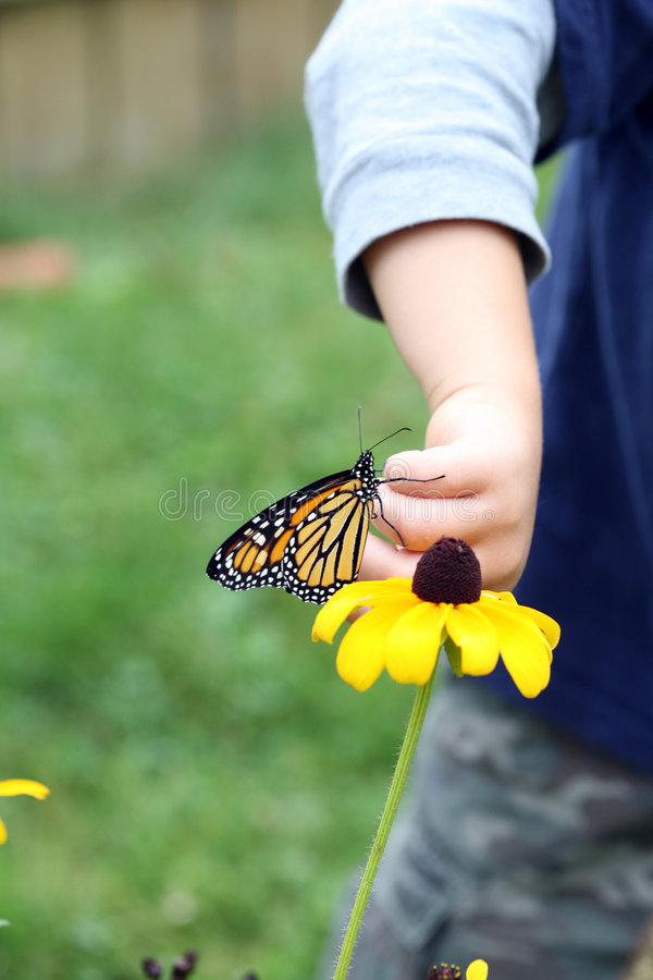 Free Young Boy Putting Monarch Butterfly On Flower Royalty Free Stock Images - 6474789