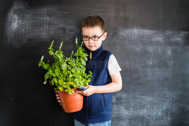 Young boy`s standing with plant in pot in his hands near blackboard. Young gardener. Creative design concept for 2019 calendar. Young boy`s standing with plant stock photo