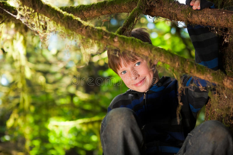 Young boy sitting in a tree smiling. Little 10 year old boy sitting in a tree smiling stock image