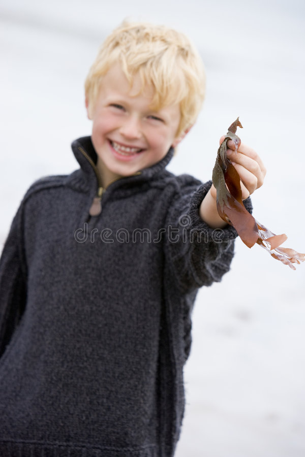 Free Young Boy Standing On Beach Holding Leaves Smiling Royalty Free Stock Photo - 5937385