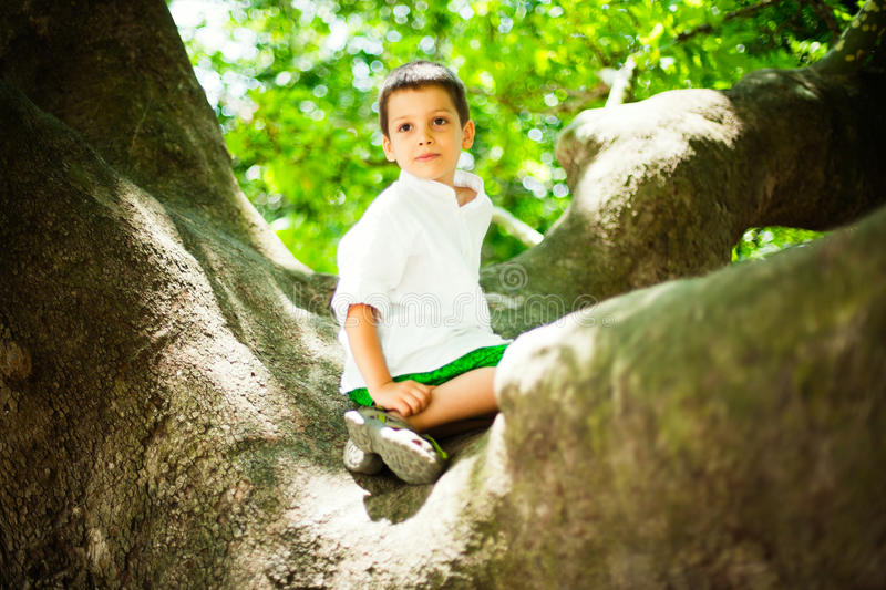 Young boy in tree stock photo