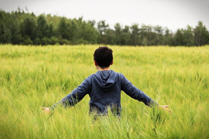 A young boy walks in a green barley field with arms out royalty free stock photos