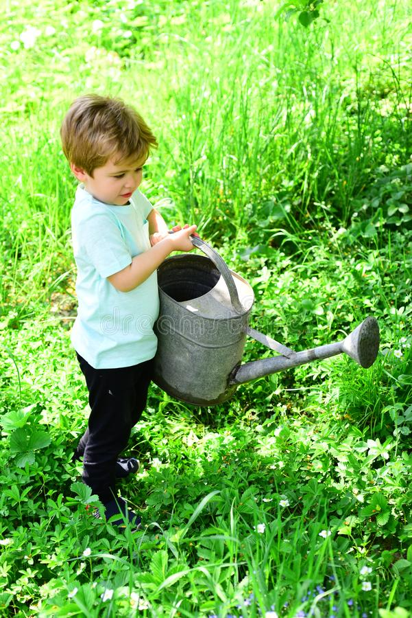 Young boy water flowers and green grass with the help of old, big and heavy watering pot. Kid helps with garden his royalty free stock photography