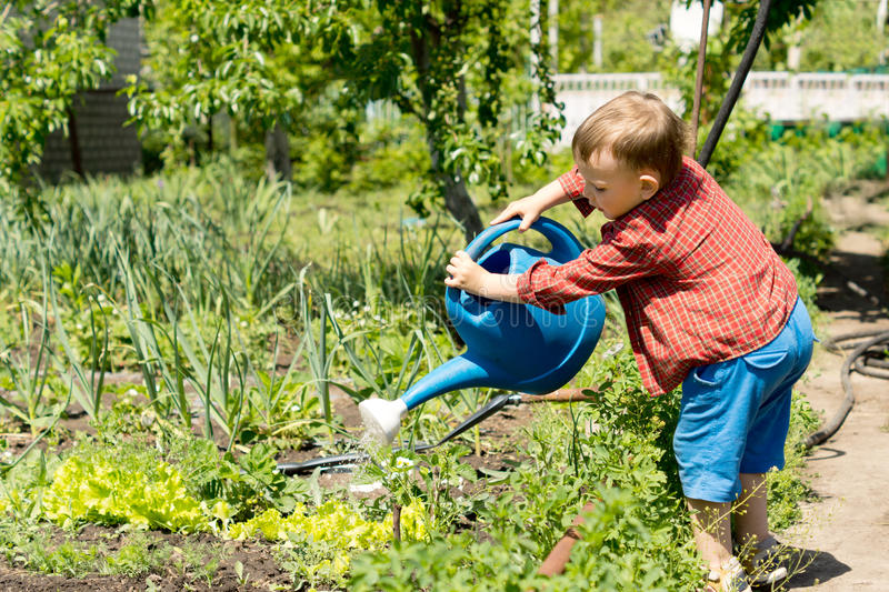 Charmant Download Young Boy Watering Rows Of Vegetables Stock Photo   Image Of  Contented, Attractive: