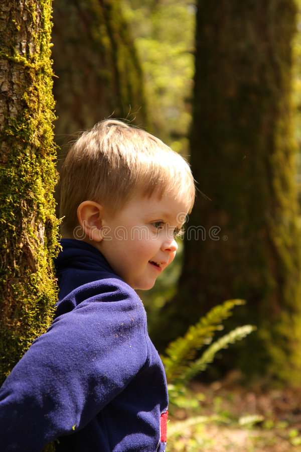 Young boy in the woods royalty free stock images