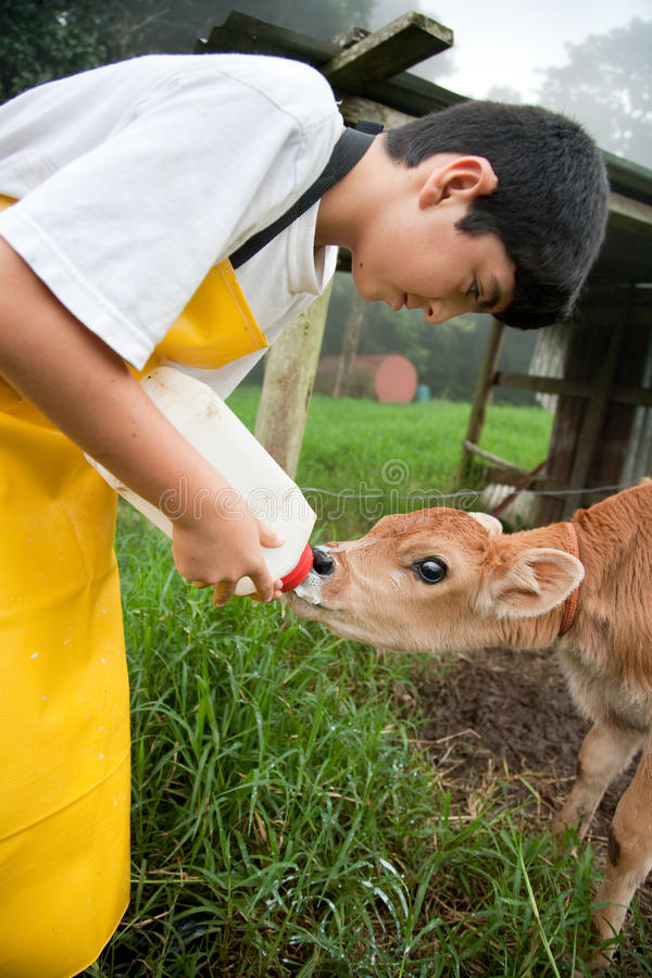 Young Boy Working On Costa Rican Dairy Farm Stock Image