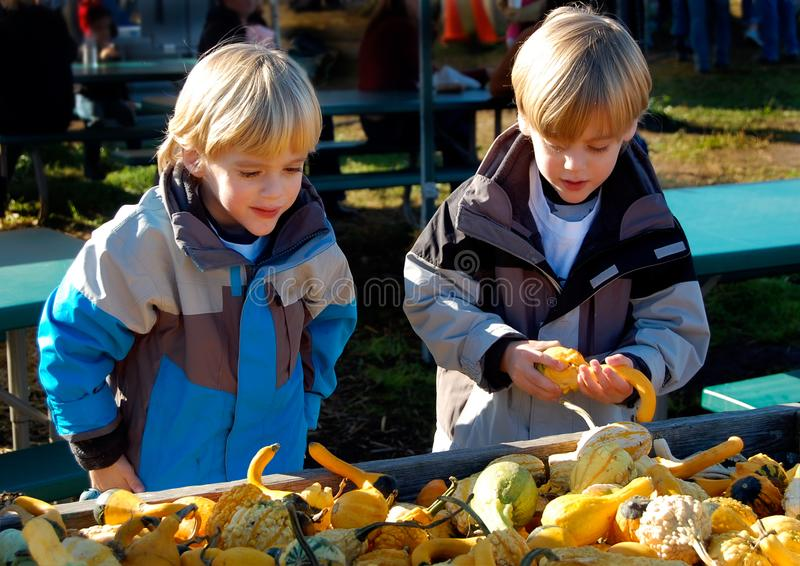 Children at Farmers Market Thanksgiving. Young boys select seasonal vegetables at the local Farmers Market. Fall colors. Squash, pumpkins, gourds royalty free stock images