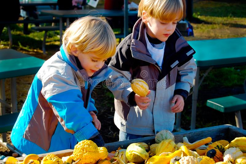 Children at Farmers Market Thanksgiving Close Up. Young boys select seasonal vegetables at the local Farmers Market. Fall colors. Squash, pumpkins, gourds stock photo