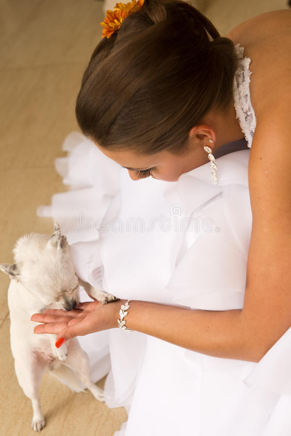 Download Young bride with pet dog stock image. Image of attractive - 26962485