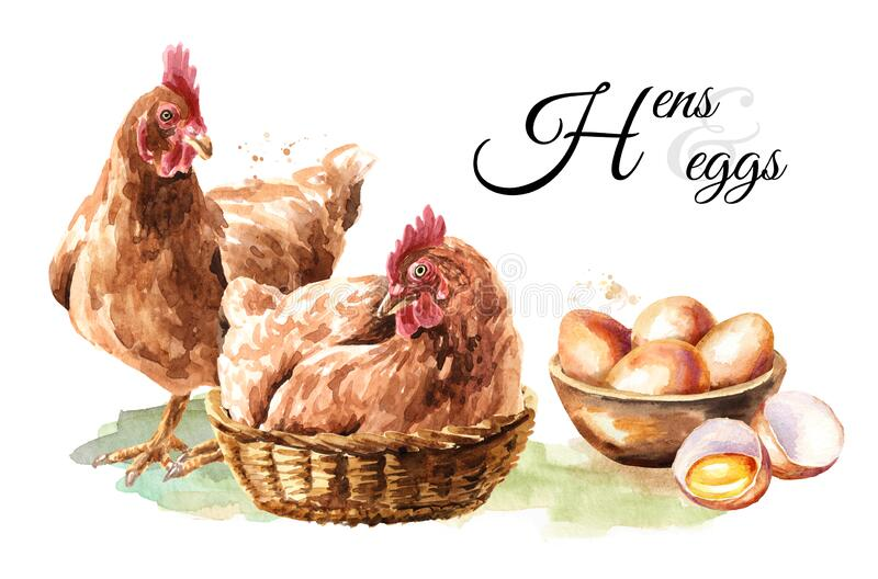 Young brown hens, chiken and eggs card. Hand drawn watercolor illustration isolated on white background.  vector illustration