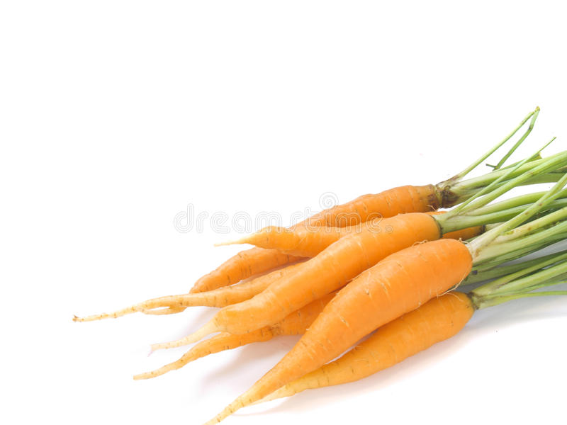 Download Young carrot isolated stock image. Image of root, vegetable - 20092643