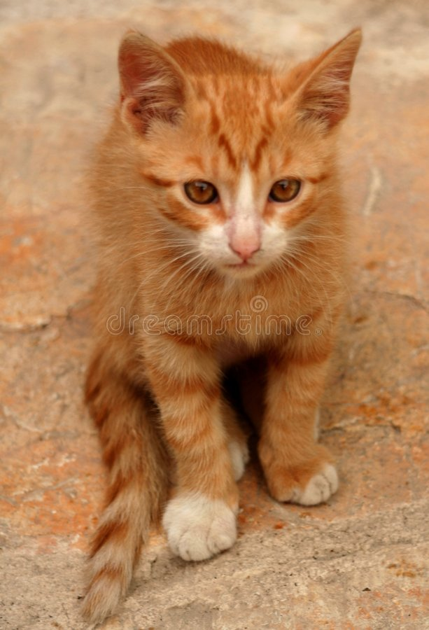 Download Young cat stock photo. Image of nice, tail, detail, eyes - 1406976