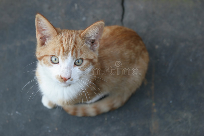 Download Young cat stock image. Image of lovely, kitty, animal - 7178333