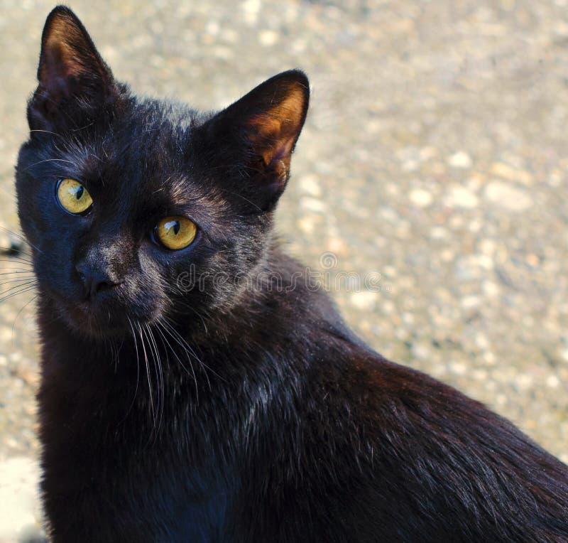 Young cat meditates royalty free stock photos