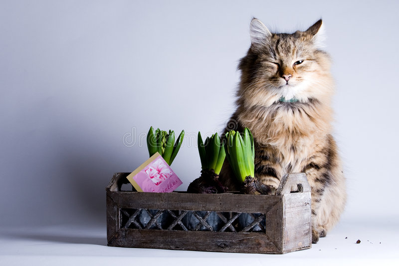 Young cat and a flower stock photo