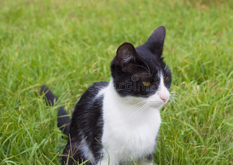 Young cat. In grass stock photo
