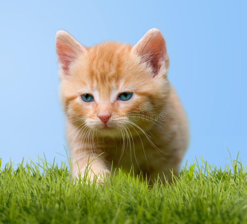 Young cat on green meadow. With blue sky royalty free stock photos