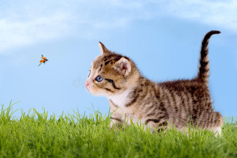 Young cat with ladybug on a green field. With blue sky stock image