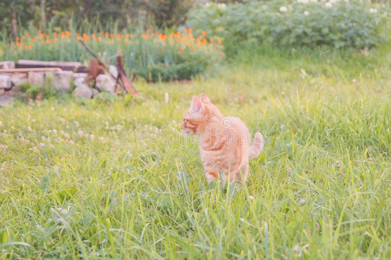 Young cat with ladybug on a green field stock images
