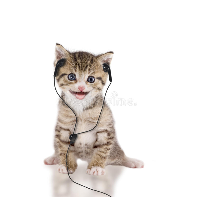 Young cat is listening to music with headphones / headset. On white background royalty free stock photos