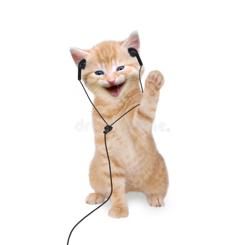 Young cat is listening to music with headphones / headset. On white background royalty free stock images