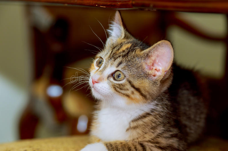 Young cat is looking forward stock photography