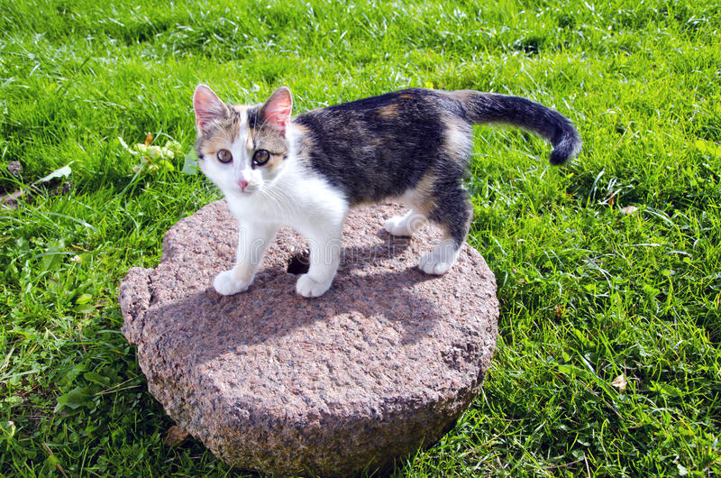 Young cat on old millstone stock photos