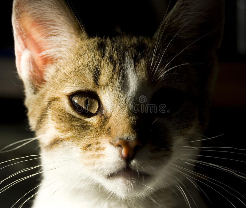 Download Young cat portrait stock photo. Image of charming, portrait - 12229396