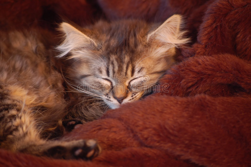 Download Young cat sleeping stock photo. Image of shut, feline - 3596720