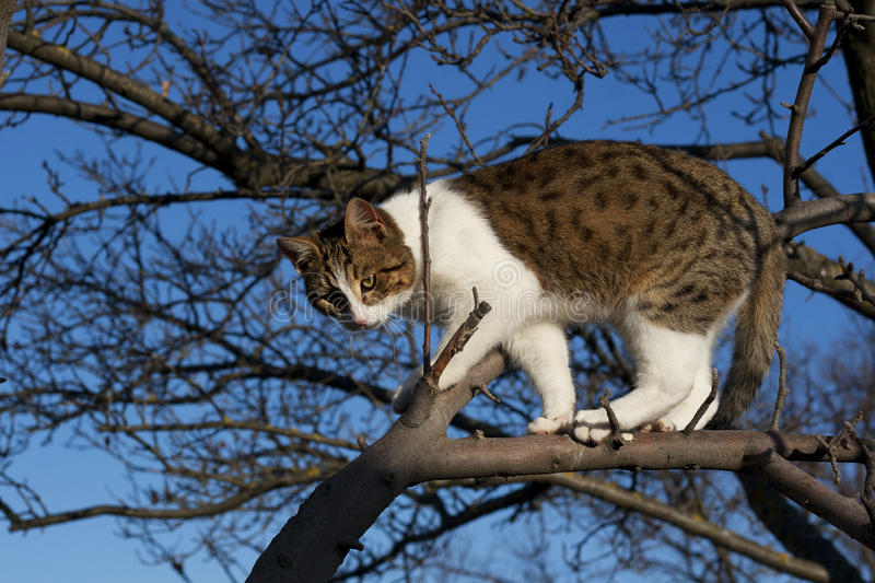 Young cat on the tree. Against the sky stock photo