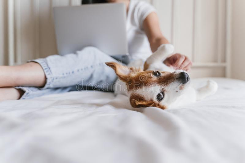 Young caucasian woman on bed working on laptop. Cute small dog lying besides. Love for animals and technology concept. Lifestyle. Indoors stock photos