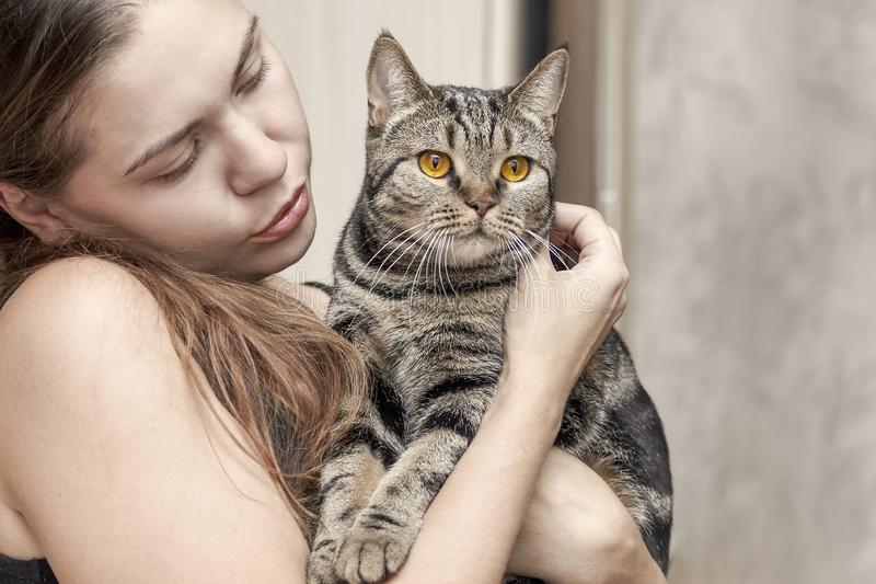 Young caucasian woman holds british short hair cat with bright yellow eyes, embracing it. royalty free stock photography