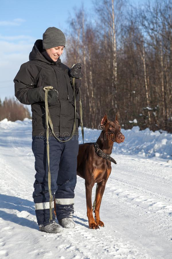Young Caucasian woman a owner standing next to doberman dog on winter road stock images
