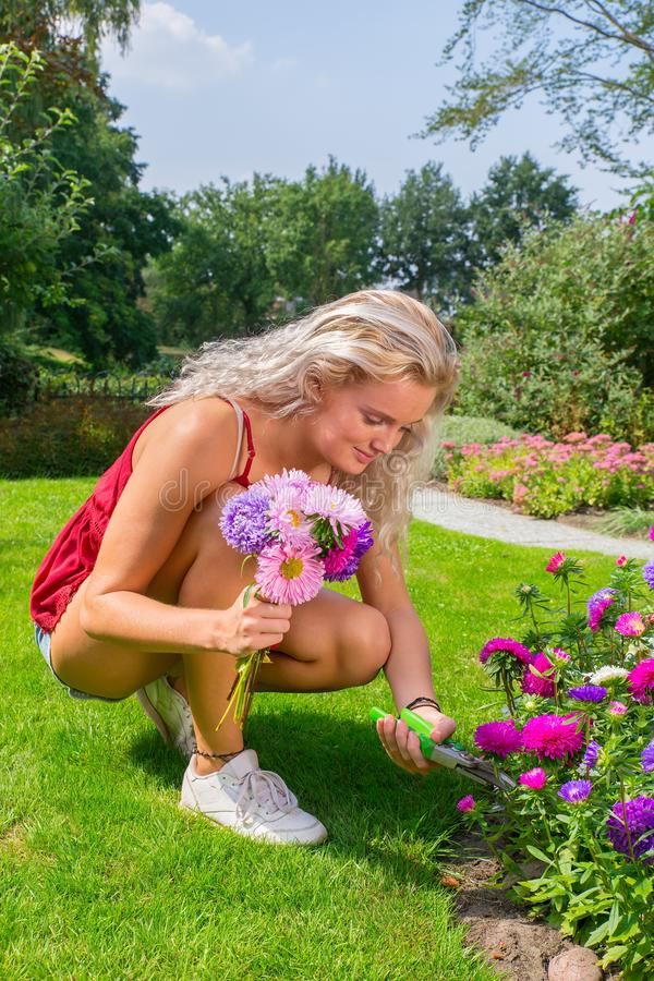 Young woman cutting off summer flowers in backyard royalty free stock photography