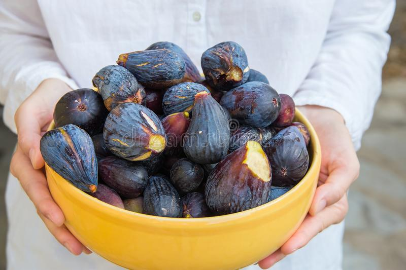Young caucasian woman in white linen cotton shirt holds in hands yellow ceramic bowl with freshly picked ripe organic purple figs royalty free stock photos