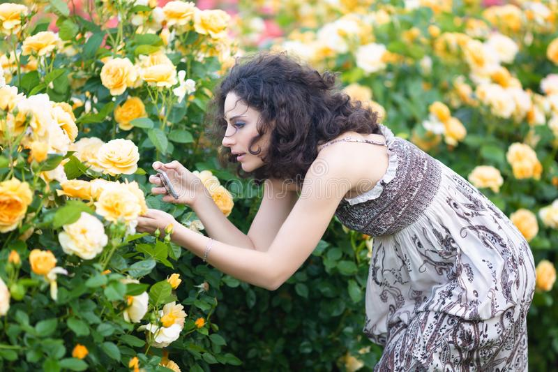 Young Caucasian women with dark curly hair taking picture of yellow rose in a rose garden with a black smartphone stock photography