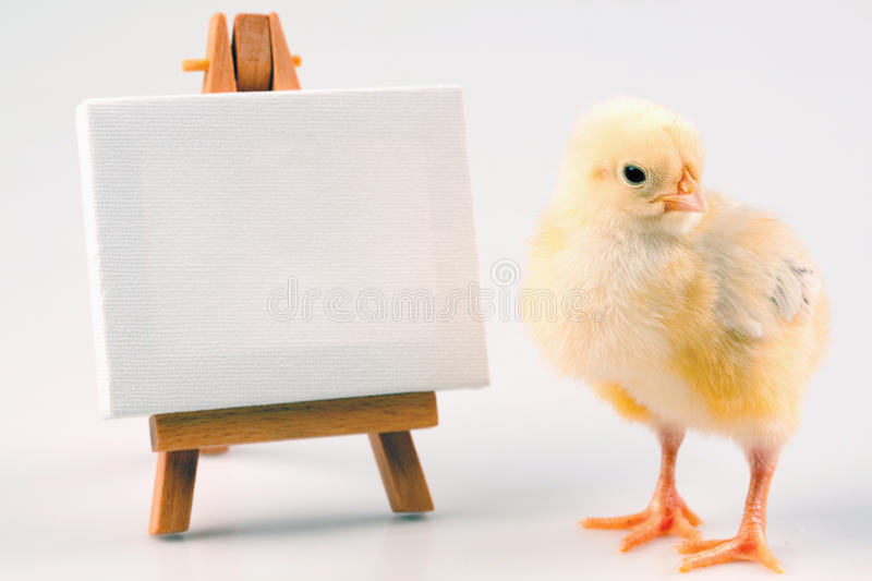 Download Young Chick Royalty Free Stock Photo - Image: 12921405