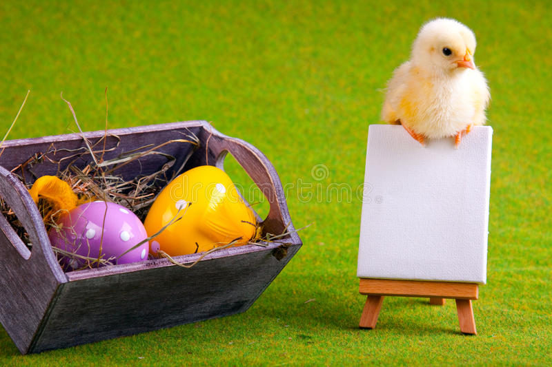 Download Young Chick on Table stock image. Image of furry, white - 12948935