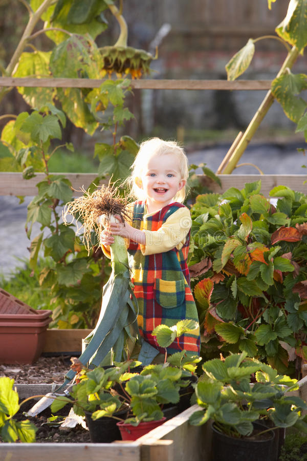 Young child on allotment stock photo