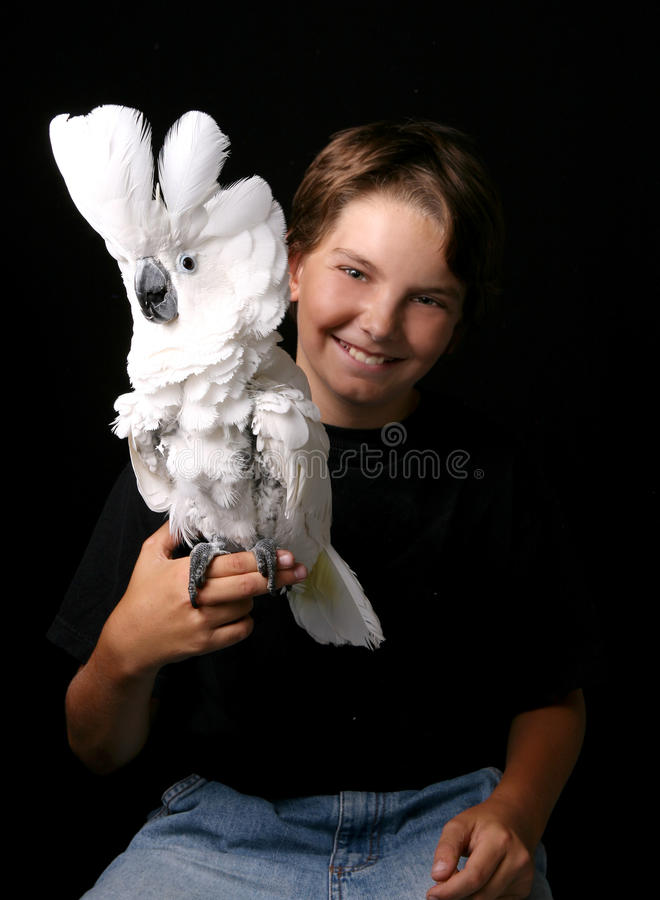 Young Child Holding an Excited Umbrella Cockatoo royalty free stock photos