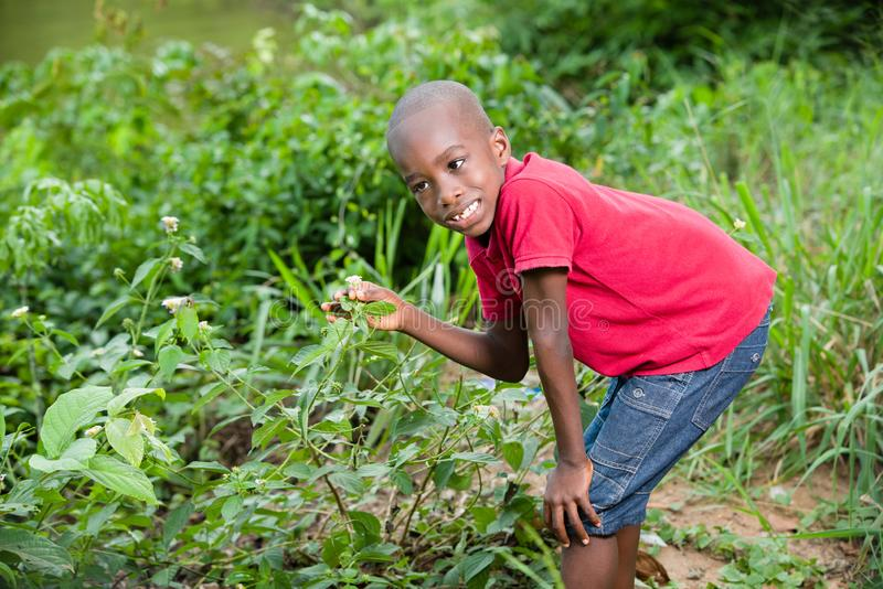 Young child picks flowers in the bush royalty free stock photos