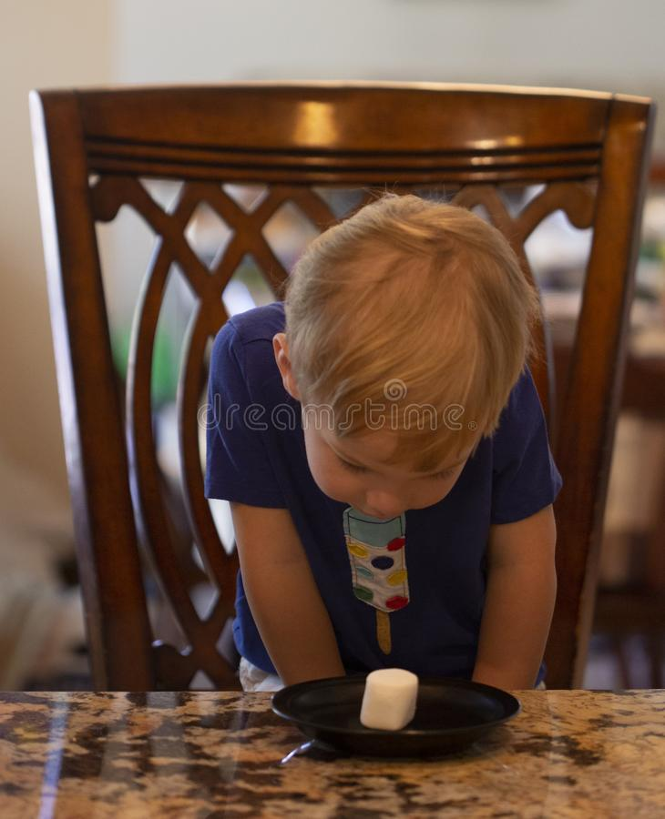 Free Young Child Sitting At A Table Waiting Patiently For A Marshmallow Stock Images - 168444904